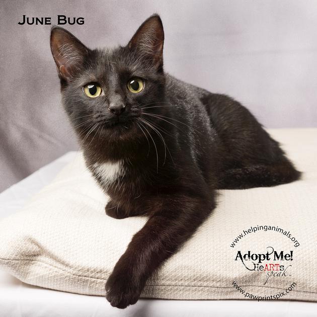 Cat Photo HELP - June Bug - 05160 -_
