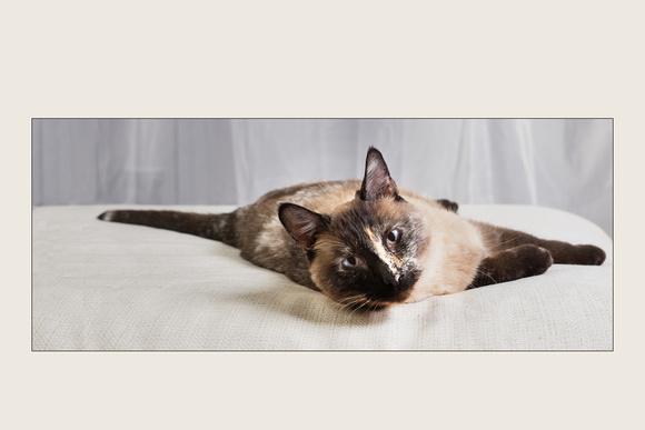 Cat Photo - Lily - 00167-2x3
