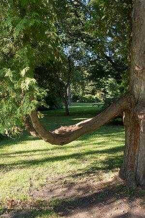 fayban park tree