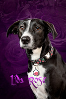 Dog Photo - Lida Rose - 5913.1