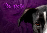 Dog Photo - Lida Rose - 5973-3