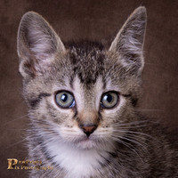 Cat Photo - Poppy - 07822 - SQ