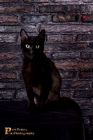 Cat Photo - Raven - 07786- WM_