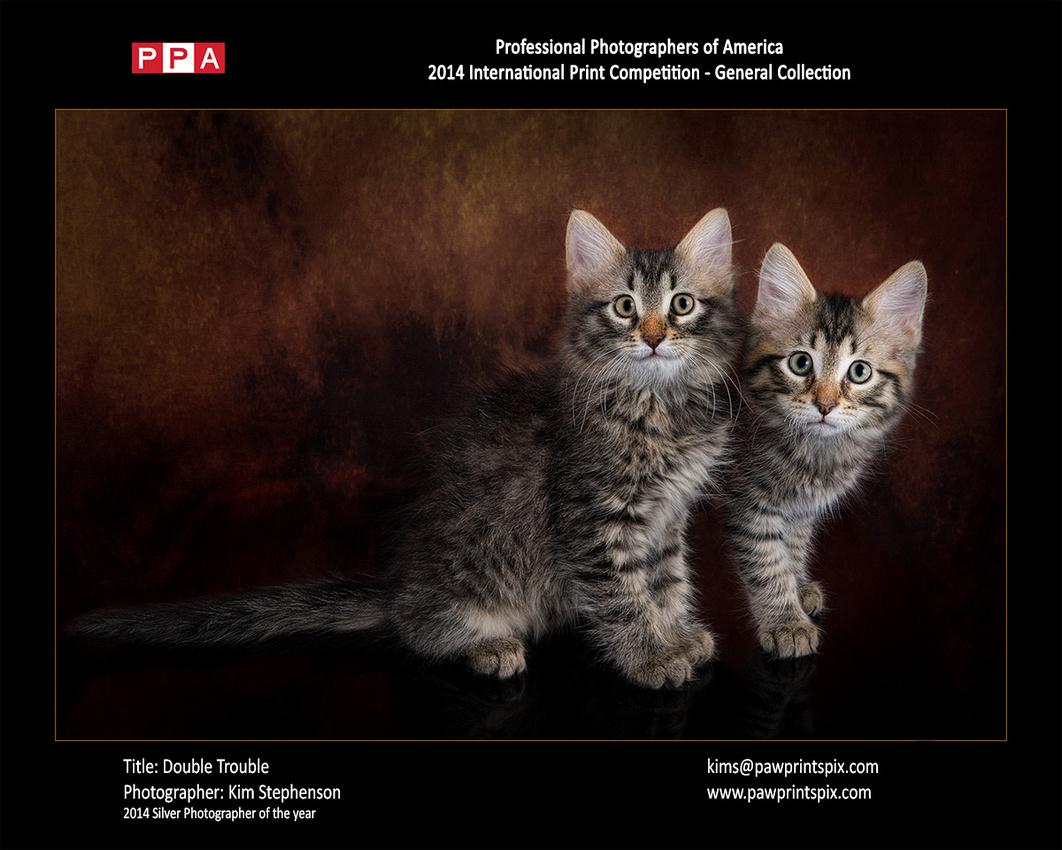 Double Trouble - Cat photo