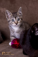 Cat Photo - Poppy - 07822- WM