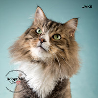 Cat Photo HELP - Jake - 9271 -_