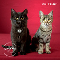 Cat Photo HELP - Ash Penny - 2377 -_
