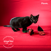 Cat Photo HELP - Pearl - 2263
