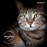 Cat Photo HELP - Cataleya - 9970 -_