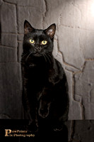 Cat Photo - Margo - 03- WM