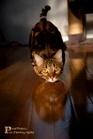 Cat Photo - Zazu - 3- WM