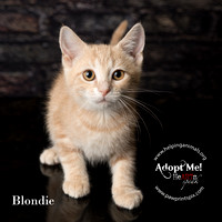 HELP - Blondie - 2014.06.21 - 08810 - SQ