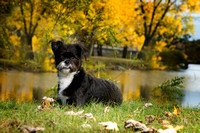 Dog Photo - Sammy - 01224_