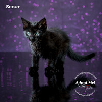 Cat Photo HELP - Scout - 4184 -_