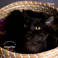 Cat Photo - Tiana - 00435 -_