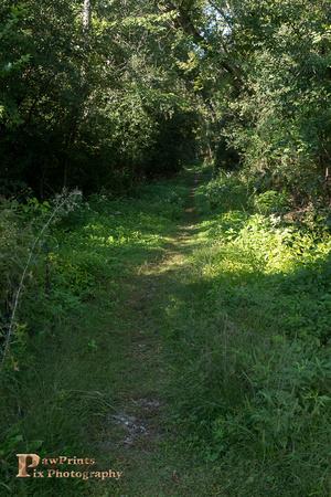 fayban park path