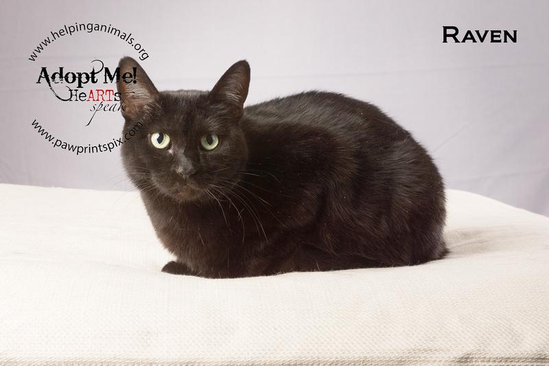 Cat Photo HELP - Raven - 05182 -_