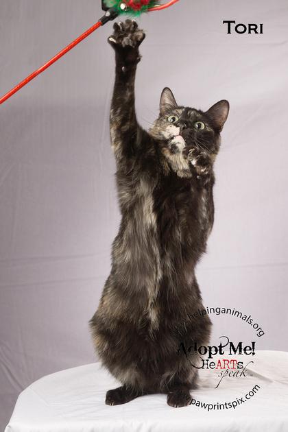 Cat Photo HELP - Tori - 05215 -_