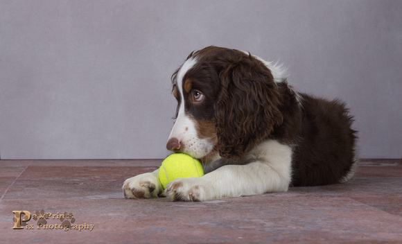 Dog Photo - Cooper - 05329-Edit