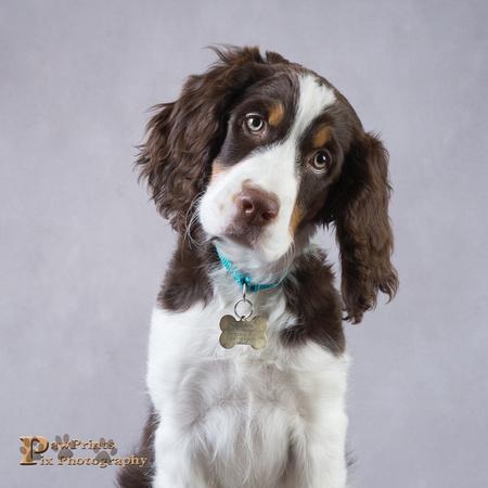 Dog Photo - Cooper - 05298