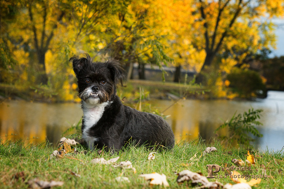 Dog Photo - Sammy -  by the river