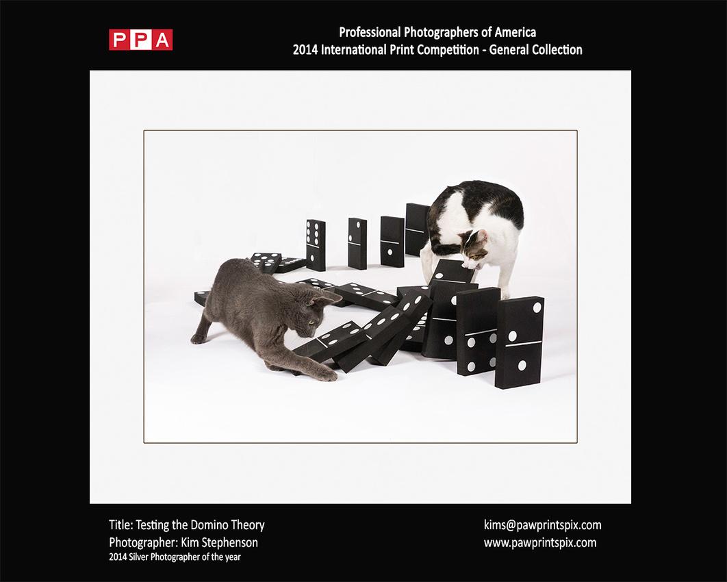 Testing the Domino Theory - Cat photo