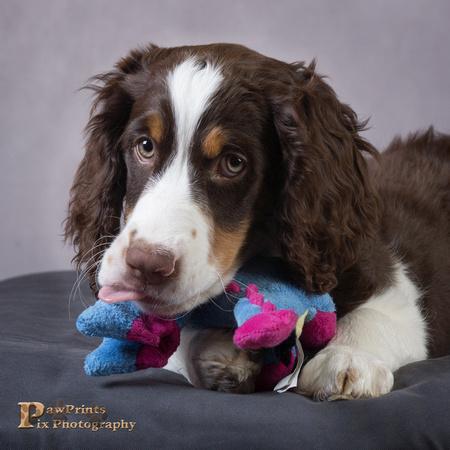 Dog Photo - Cooper - 05316-Edit