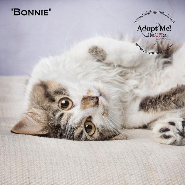 Cat Photo HELP - Bonnie