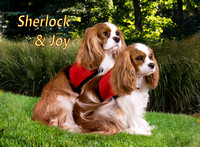 Sherlock and Joy - Garden2
