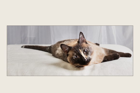 Cat Photo - Lily - 00167-2x3