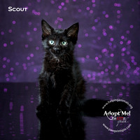 Cat Photo HELP - Scout - 4189 -_