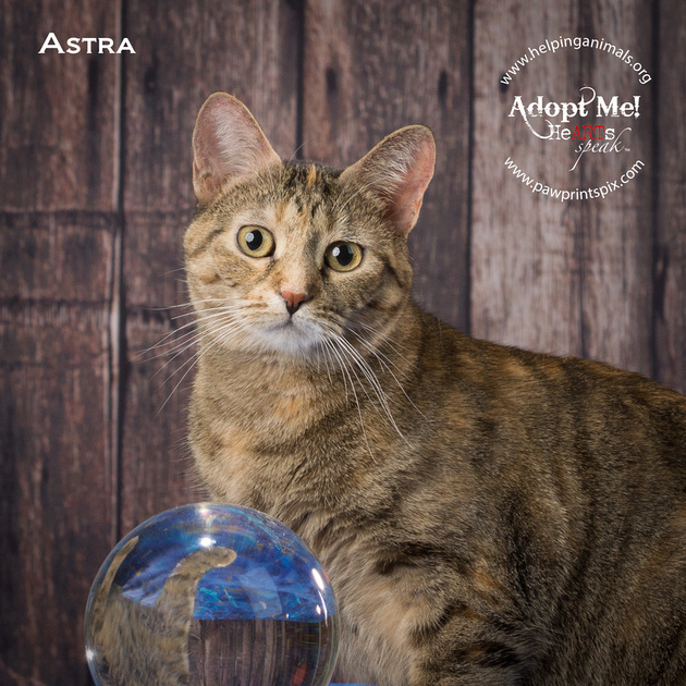 Cat Photo HELP - Astra - 05083 -_