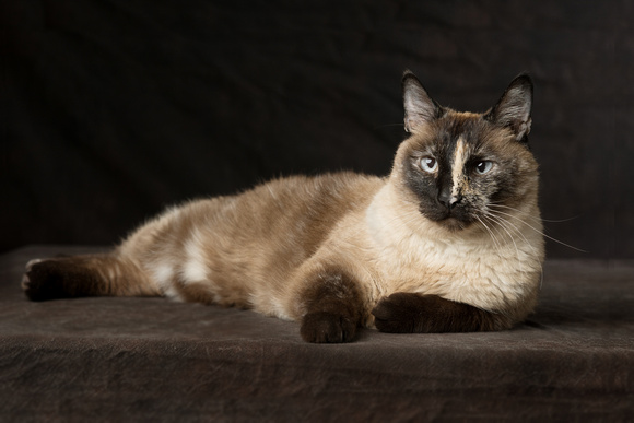 Cat Photo - Lily - 00317